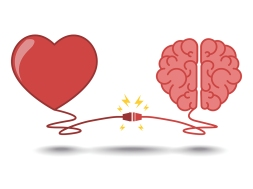 brain and heart interactions concept best teamwork
