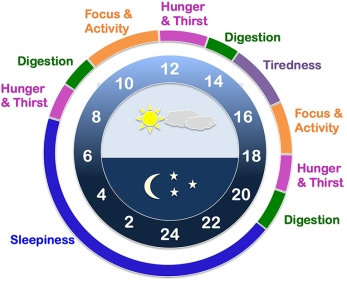 internal clock.